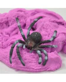 Spinnenzand met spin