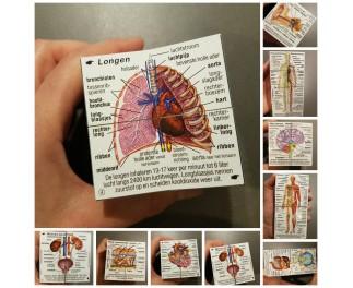 Scala leuker leren Kubusboek menselijk lichaam
